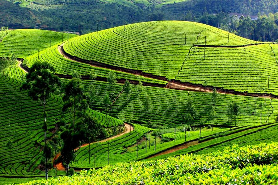 Day 1 Arrival in Munnar   Welcome to the Valley of Tea