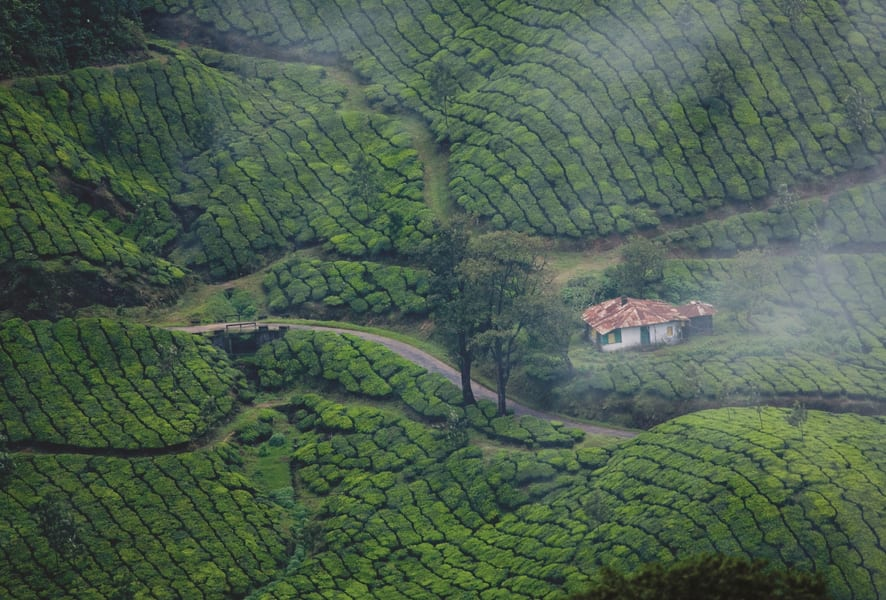 Day 1 Cochin to Munnar | Visit to the Green Capital of India